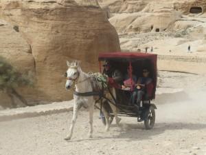 Лошади дружат и с людьми, и верблюдами.